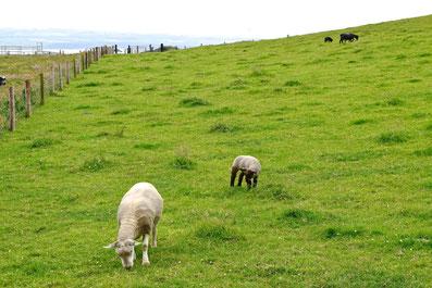 What to See around Cork, Ireland - Cliffs of Moher