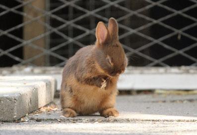 Foto von Anja, Kaninchen bei der Körperpflege