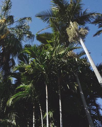 wie findet man als Backpacker in Australien einen Job