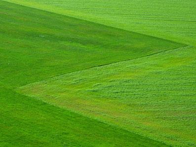 Rollrasen vom BM Pflanzenparadies Oranienburg wird verlegt