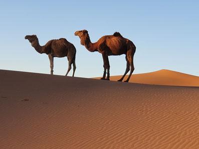 Circuit et vacances Sahara Maroc