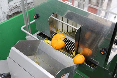 柑橘果汁商品生産ライン・搾果汁