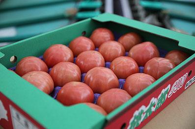 トマト養液栽培・出荷前箱詰めトマト
