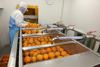 柑橘果汁商品生産ライン・果実洗浄