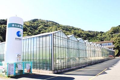 トマト養液栽培・ハウス施設