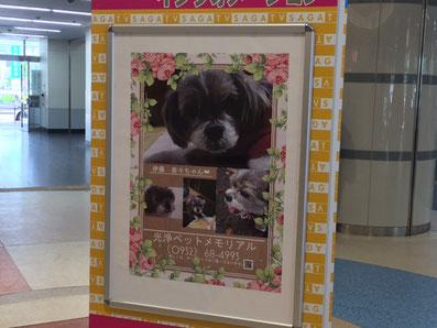 光浄ペットメモリアル 佐賀駅のポスター