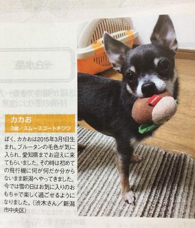 キャレル メディア 記事 掲載 ペット 犬