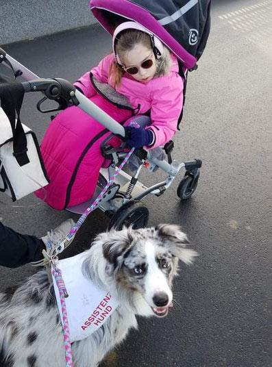 Aussie Teddy und Milah bei einem Ausflug