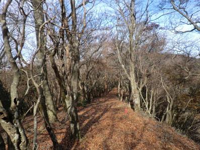 青スズ台から八丁池への尾根道