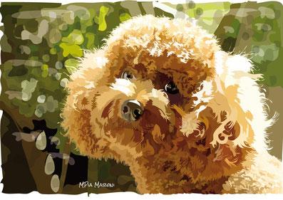 index-image-disegno-drawing-portrait-disegno vettoriale-ritratti cani e gatti realistici-con computer-cane-pet-dog-animali da compagia-digital-art-barboncino-albicocca-poodle-brown-primo piano-sguardo-dolce-attento