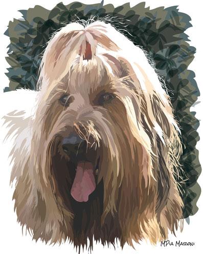 disegno-drawing-portrait-cane-dog-digital-art-Briard-pastore-della-Brie-ritratto-primo-piano-muso-attento