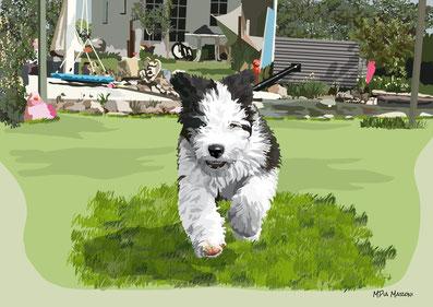disegno-drawing-bobtail-cane-dog-digital-art-cucciolo-corsa- giardino-illustrazione