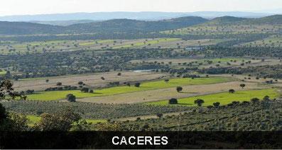 PROVINCIA DE CACARES