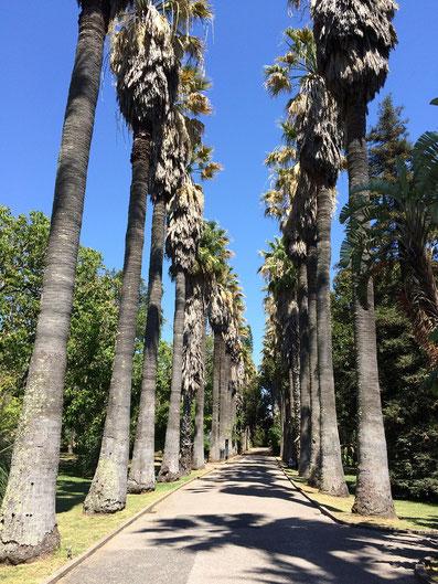 Jardim Botânico da Ajuda in Belem, Lisbon