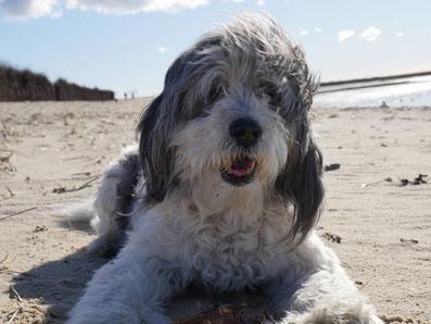 Ferienwohnungen Duhnen mit Hund