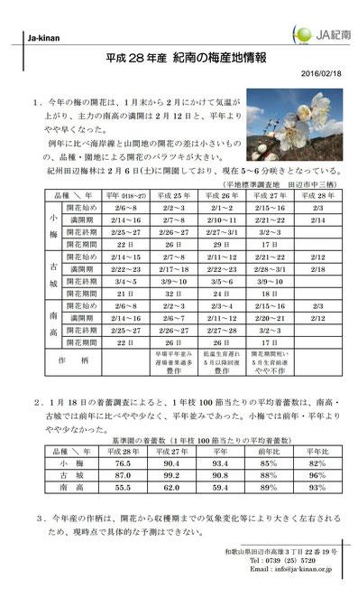 JA紀南 H28梅産地情報【2/18】