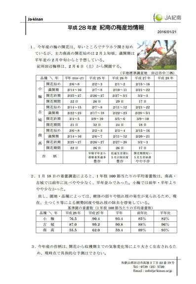 JA紀南 H28梅産地情報【1/21】