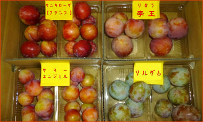 4種のすもも ふるさと納税返礼品【田辺市】2017年度  和×夢 nagomu farm