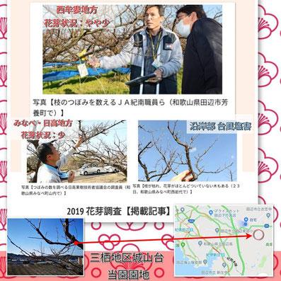 2019花芽調査【掲載記事】紹介