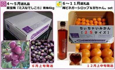 紫宝梅 ふるさと納税返礼品【田辺市】2017年度  和×夢 nagomu farm