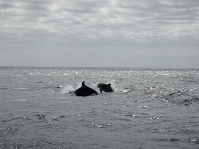 Dolphins; Dolphintour;