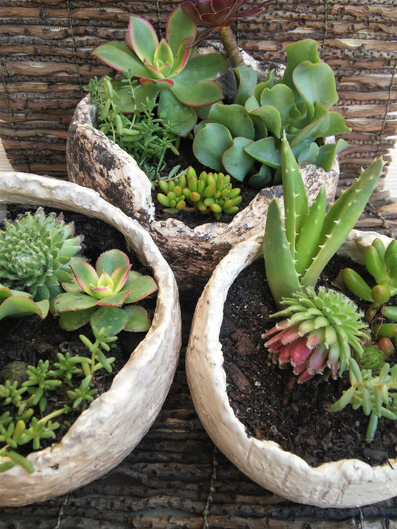 pot de fleur  ollas oias Hyères Var poterie d'irrigation
