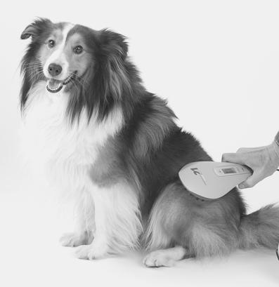 Lasertherapie beim Hund