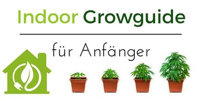 Indoor Growguide für Anfänger