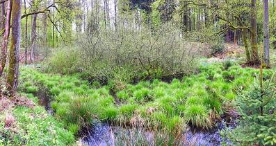 Birchweiher Rheinfelden. Ein uralter Weiher mit Pflanzenraritäten.