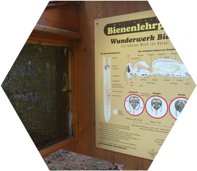 """Kinder und Eltern erfahren am """"Maltataler Bienenlehrpfad"""" alles über die fleißigen Insekten, die mehr als nur Honiglieferanten sind. 14 Stationen mit informativen Schautafeln. www.bienenzuchtverein-malta.at"""