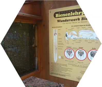 Im Bezirk Spittal/Drau wurden in den letzten Jahren durch unsere Imker und Bienenzuchtvereine zahlreiche Bienenlehrpfade errichtet. Ein kleiner Blick ins Detail, tauchen Sie ein in das Wunderwerk Bienen.