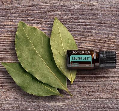 Aroma Welt >> doTERRA Laurel Leaf Öl - Deutsch (Lorbeer): Wirkung, Anwendung, Beratung, Rezepte