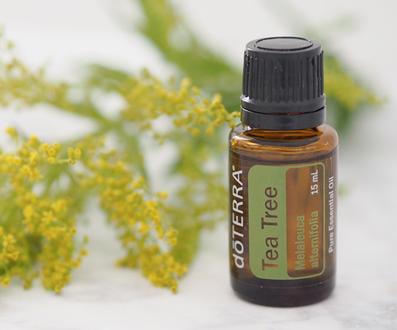 doTERRA Tea Tree - Melaleuca - Öl Deutsch (Teebaum): Wirkung, Anwendung, Mitgliedschaft, Beratung, Rezepte