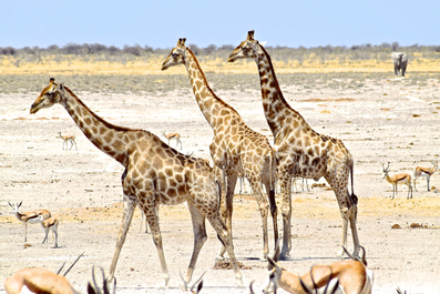 2 Weeks in Namibia - Your Ultimate Itinerary - Etosha National Park