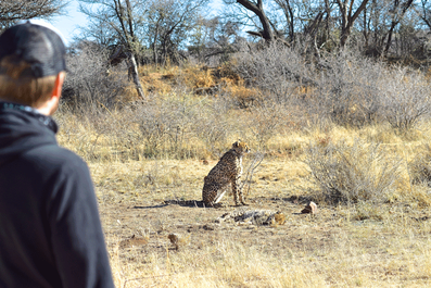 2 Weeks in Namibia - Your Ultimate Itinerary -Okonjima Nature Reserve