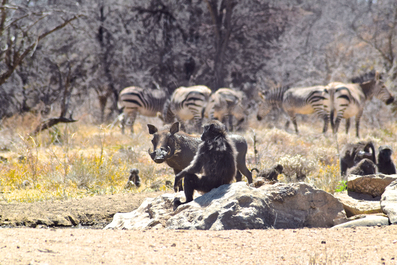 2 Weeks in Namibia - Your Ultimate Itinerary - Okonjima Nature Reserve