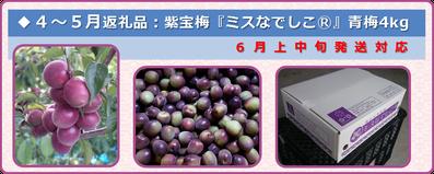 紫宝梅『ミスなでしこⓇ』 ふるさと納税返礼品【2017】6月発送品 和×夢 nagomu farm