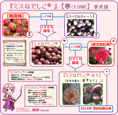 ミスなでしこⓇGT [Y]ume家系図 和×夢 nagomu farm