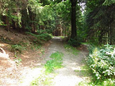 Abzweig vom Zwönitztalweg