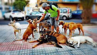 paseador canino Sebastián (Tenerife)