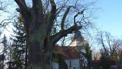 Hornow ist der Natur schon verdammt nahe. Nicht alle Bäume sind 800 Jahre alt wie diese Eiche. Aber der Bestand an ehrwürdigen Bäumen ist hoch in diesem Spremberger Ortsteil.