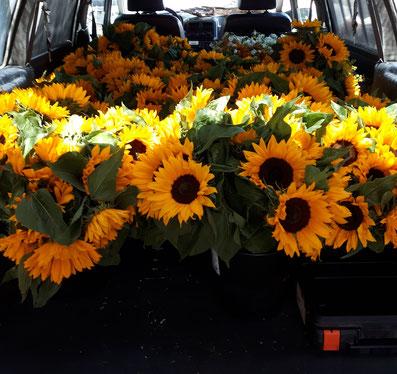 1 ère  livraison de fleurs de tournesols à Arcachon