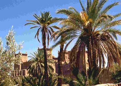 Palma da dattero nel deserto del Marocco