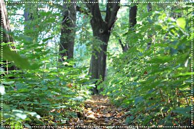 Waldbild - Bäume und Laub auf dem Boden
