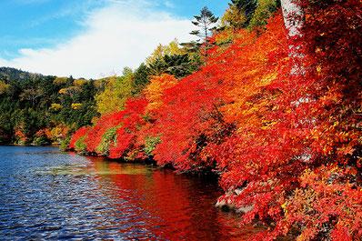 紅葉の北八ヶ岳画像