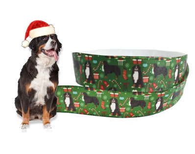 Weihnachten Hund Borte Berner Sennenhund