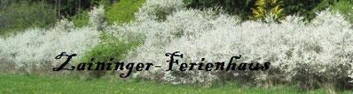 www.zaininger-ferienhaus.de