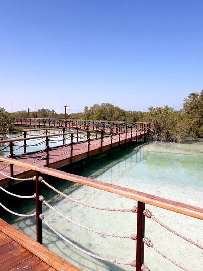 Abu Dhabi's neueste Attraktion: Der Mangroven Boardwalk