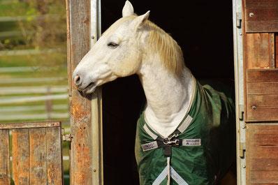 Pferd vorm Stall