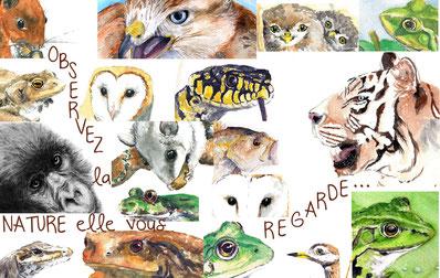 illustrations naturalistes